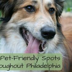 Discover Pet-Friendly Spots Throughout Philadelphia