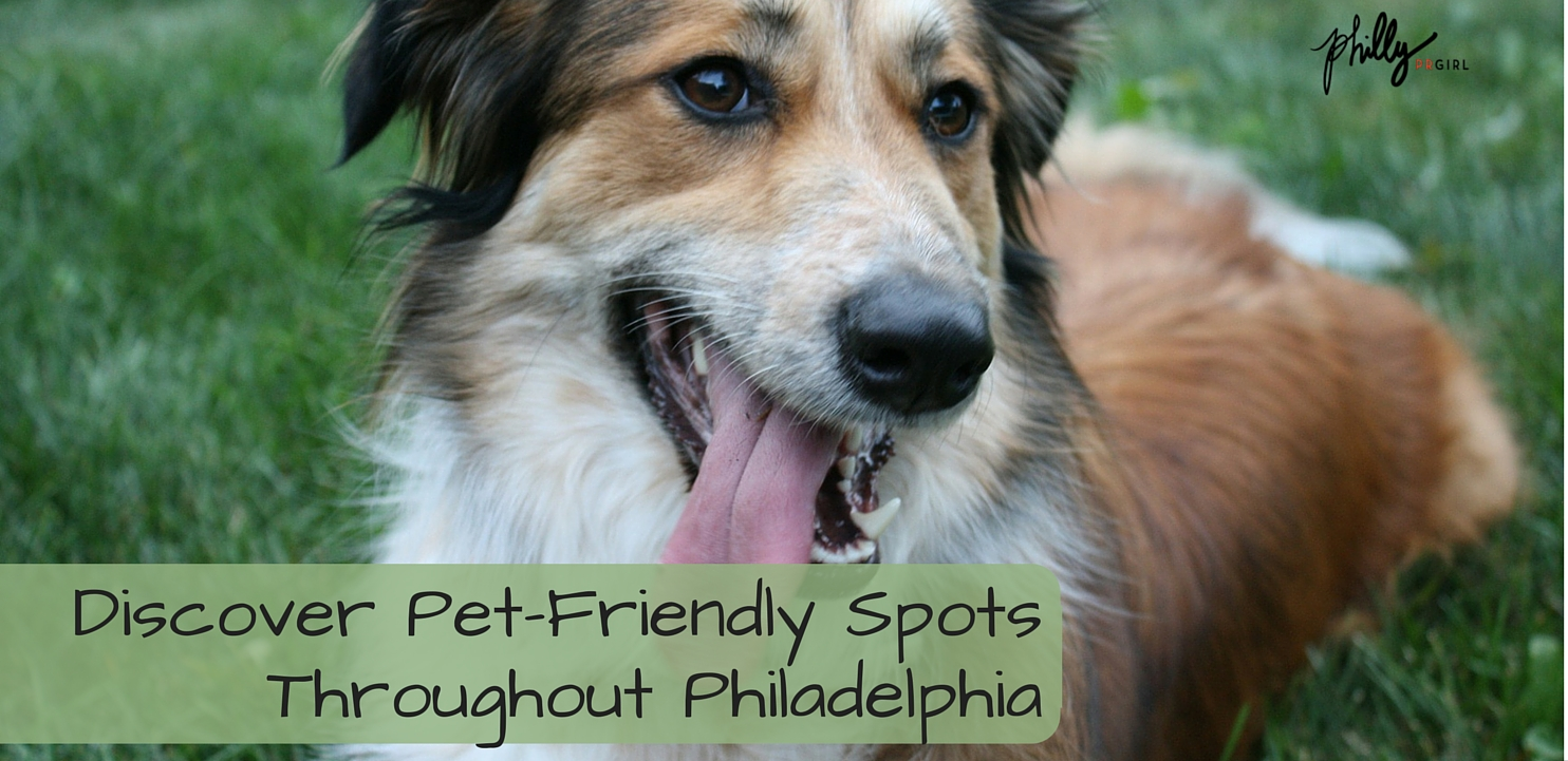 pet-friendly places in philly